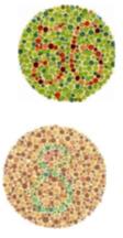 color blind test in olathe, ks