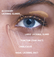 Eye Doctor, Woman right eye with oasis tears plus in Costa Mesa, CA,