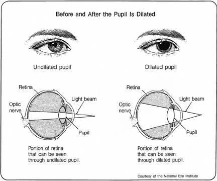pupil dilateon